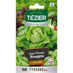 Tezier - Laitue Pommée Novappia (G,N,)