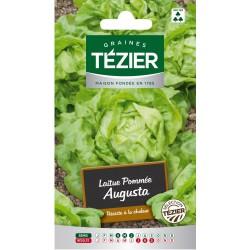 Tezier - Laitue Pommée Augusta (G,N,)
