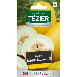 Tezier - Melon jaune Canari 3