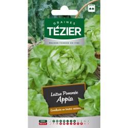 Tezier - Laitue Pommée Appia (G,B,)