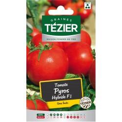 Tezier - Tomate Pyros HF1