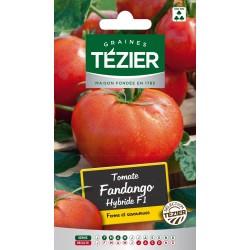 Tezier - Tomate Fandango HF1