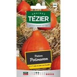 Tezier - Potiron Potimarron