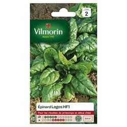 Vilmorin - Epinard Lagos HF1
