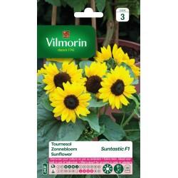 Vilmorin - Tournesol Suntastic F1 (extra nain)