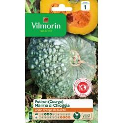 Vilmorin - Courge Marina Chioggia