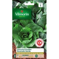 Vilmorin - Chicorée Grumolo Verde Vl1 806