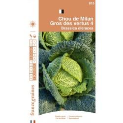 France Graines - Chou Gros des Vertus
