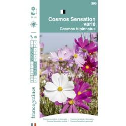 France Graines - Cosmos Sensation Mix