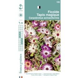 France Graines - Ficoïde Tapie Magique