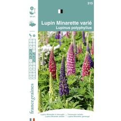 France Graines - Lupin Minarette Varié