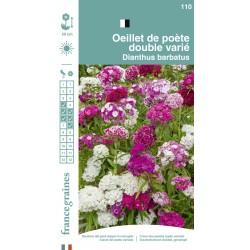 France Graines - Oeillet Poète Double Mix