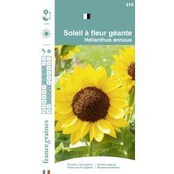 France Graines - Soleil Fleur Géante