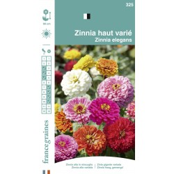 France Graines - Zinnia Haut Mix