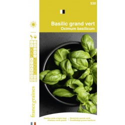 France Graines - Basilic  Grand Vert