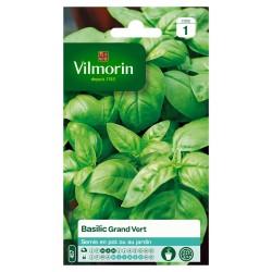 Vilmorin - Basilic Grand Vert
