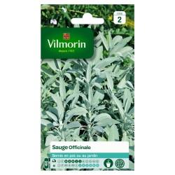 Vilmorin - Sauge Officinale
