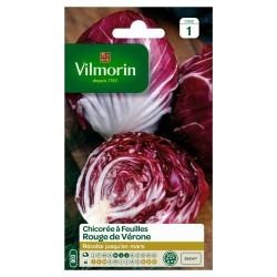 Vilmorin - Chicorée Rouge de Véronne