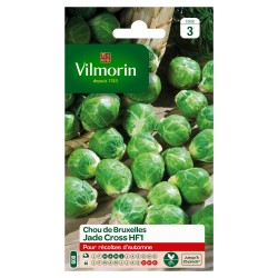 Vilmorin - Chou de Bruxelles Jade Cross HF1 (remplace Content)