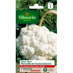 Vilmorin - Chou Fleur Merv 4 Saisons Vl 1