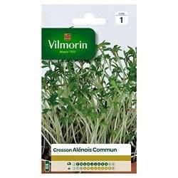 Vilmorin - Cresson Alenois Commun