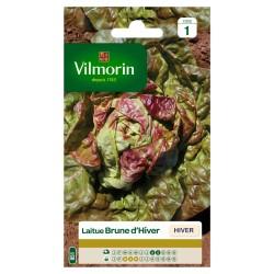 Vilmorin - Laitue d'hiver Brune d'hiver