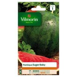 Vilmorin - Pastèque Sugar Baby