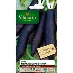 Vilmorin - Radis noir gros long d'hiver