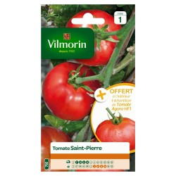 Vilmorin - Tomate Saint Pierre