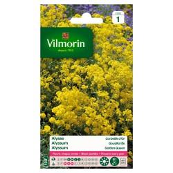 Vilmorin - Alysse Corbeille d'Or