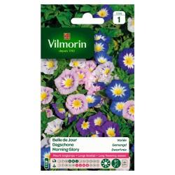 Vilmorin - Belle de jour variée