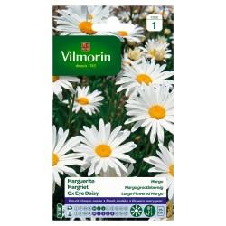 Vilmorin - Chrysanthème Grande Marguerite Margo Des Prés