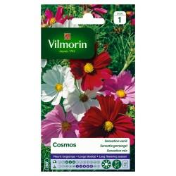 Vilmorin - Cosmos Sensation Varié