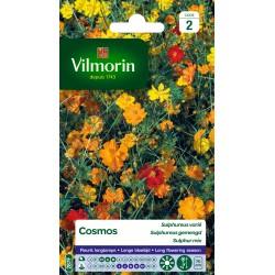 Vilmorin - Cosmos Sulphureus varié