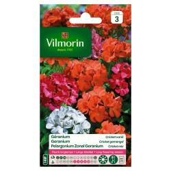 Vilmorin - Géranium Cricket Varié
