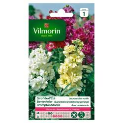 Vilmorin - Giroflée QUAR, GDE FL Mix