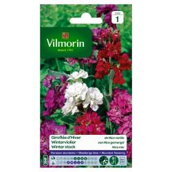 Vilmorin - Giroflée Nice Mix