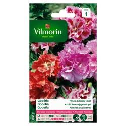 Vilmorin - Godetia DBL FL Azalée Mix
