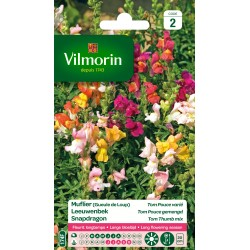 Vilmorin - Muflier Tom-Pouce varié