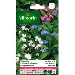 Vilmorin - Myosotis des Alpes Varié
