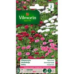 Vilmorin - Pâquerette Tapis varié