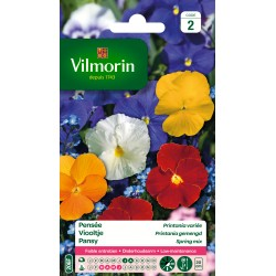 Vilmorin - Pensée Printania variée