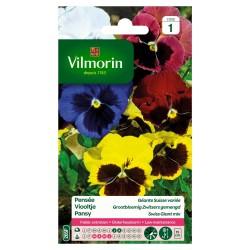 Vilmorin - Pensée Géante Multicolore