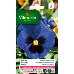 Vilmorin - Pensée Géante Lac de Thoune (bleu)