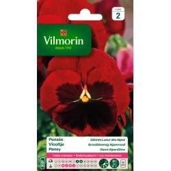 Vilmorin - Pensée Géante Lueur des Alpes (rouge)