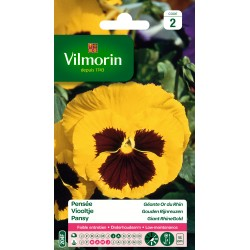 Vilmorin - Pensée Géante Or du Rhin (jaune maculé)