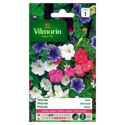 Vilmorin - Pétunia Varié