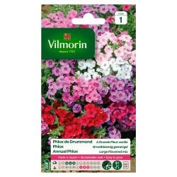 Vilmorin - Phlox De Drummond à Grande Fleur Varié