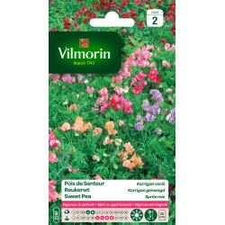 Vilmorin - Pois de senteur Korrigan varié (massifs nains)