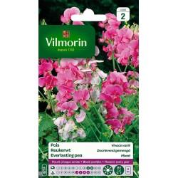 Vilmorin - Pois vivace varié